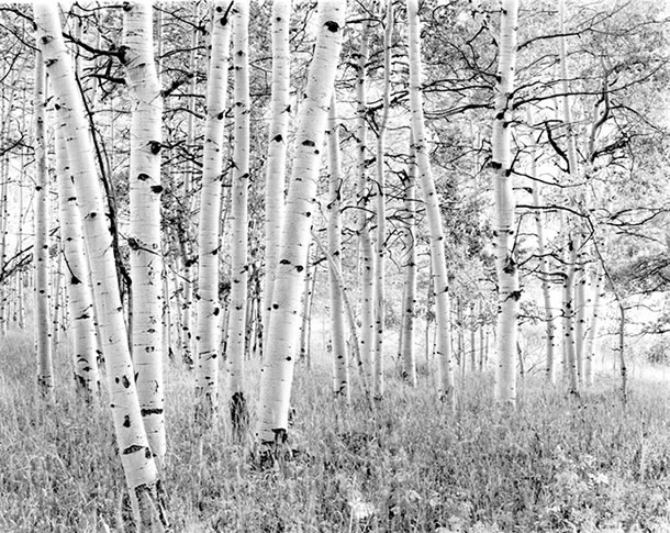 Aspens, Snowmass Colorado, 2000