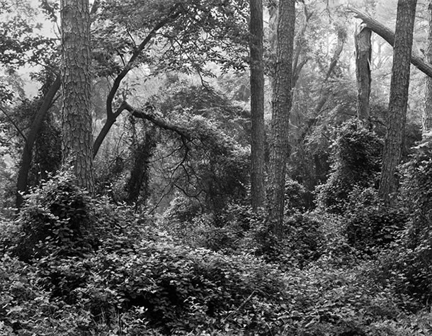 Morning Mist, Woodland Trail, Assateague Island Virginia, 2008