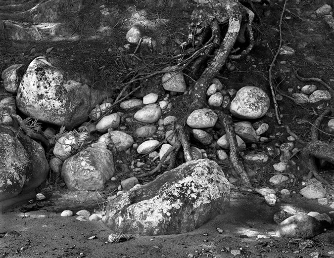 Wild River Maine, Rocks and Roots, 2008