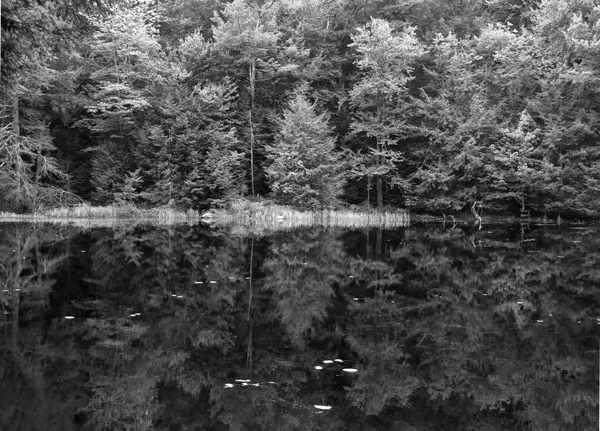 Summer Pond, Heald Track, Wilton NH 2013